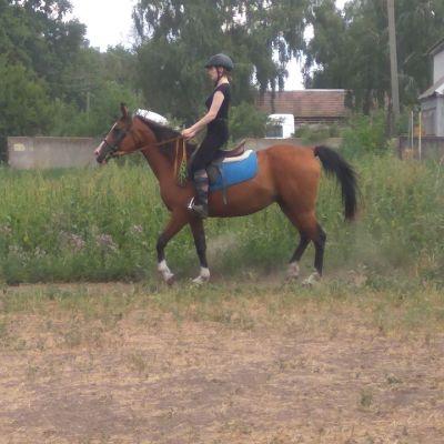 Клуб любителей лошадей Аматор